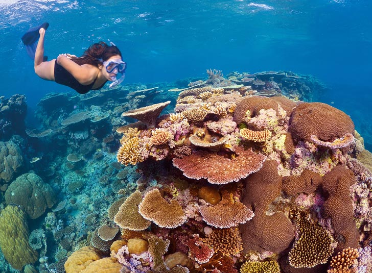 Diving on the Reef