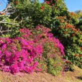 Sunset Villa garden flowers