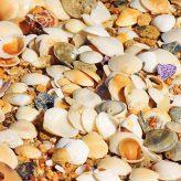 Photo of shells on a beach