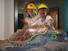 2 children measuring a display turtle